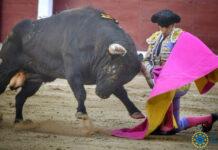 Una puñalada en los bajos deja a Perera sin puerta grande